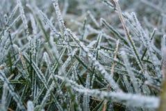 Plan rapproché de gel d'herbe Images libres de droits