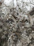 Plan rapproché de glace sur un arbre en hiver images libres de droits
