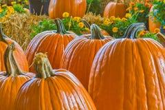 Plan rapproché de grands potirons oranges Photographie stock libre de droits