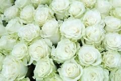 Plan rapproché de groupe lumineux fraîchement de grandes roses blanches de coupe Image libre de droits