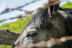 Plan rapproché de l'oeil d'un cheval Photographie stock
