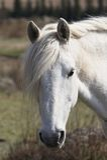 Plan rapproché de l'oeil d'un cheval Photographie stock libre de droits