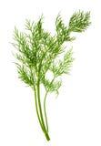 Plan rapproché de la feuille d'herbe d'aneth d'isolement sur le blanc Photographie stock libre de droits