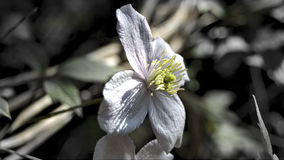Plan rapproché de la fleur violette photographie stock