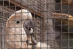 Plan rapproché de la patte griffée du perroquet rose dans la volière images libres de droits