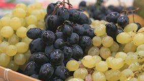 Plan rapproché de la personne inconnue de mains prenant des raisins banque de vidéos