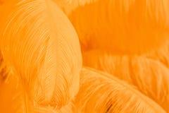 Plan rapproché de la pile des plumes pelucheuses oranges Photo stock