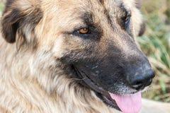 Plan rapproché de la tête un chien égaré photos libres de droits