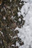 Plan rapproché de la texture d'une écorce d'arbre couverte de neige avec un fond mou photos libres de droits