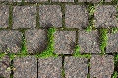 Plan rapproché de la tuile en pierre avec l'herbe Image stock