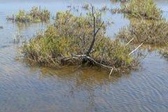 Plan rapproché de lagune de saumure photographie stock libre de droits
