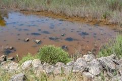 Plan rapproché de lagune de saumure photo stock