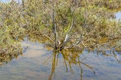 Plan rapproché de lagune de saumure image stock