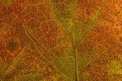 Plan rapproché de lame d'automne Photos stock