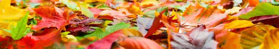 Plan rapproché de lames d'automne photos libres de droits