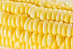 Plan rapproché de maïs Image libre de droits
