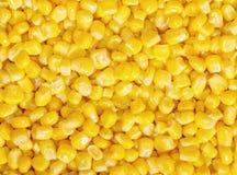 Plan rapproché de maïs entier bidon de noyau Images libres de droits