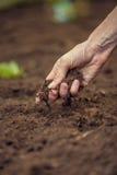 Plan rapproché de main femelle tenant une poignée de sol fertile riche t Image libre de droits