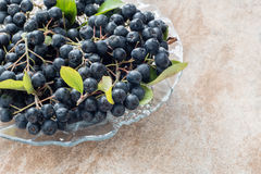 Plan rapproché de melanocarpa noir mûr frais d'Aronia de chokeberry avec des feuilles dans le pot en verre sur le fond en céramiq Photographie stock libre de droits