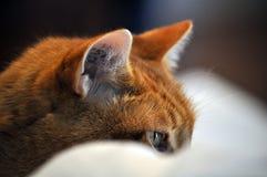 Plan rapproché de mon profil du ` s de chat Image stock