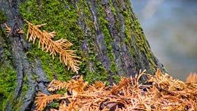 Plan rapproché de Moss Covered Tree Trunk images libres de droits