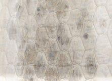 Plan rapproché de moule sur le matelas, problèmes de santé photos stock