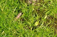 Plan rapproché de mousse verte dans le pot Photos libres de droits
