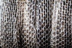Plan rapproché de mue de serpent Photo stock