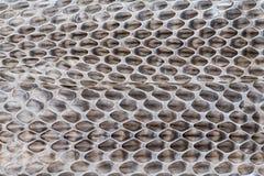 Plan rapproché de mue de serpent Image libre de droits