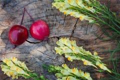 Plan rapproché de muflier et de moitiés de pomme de paradis Photos stock