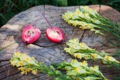 Plan rapproché de muflier et de moitiés de pomme de paradis Photographie stock libre de droits
