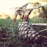 Plan rapproché de nature et d'herbe verte image libre de droits