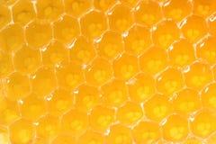 Plan rapproché de nid d'abeilles Image stock