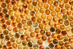 Plan rapproché de nid d'abeilles dans le rucher Photos libres de droits