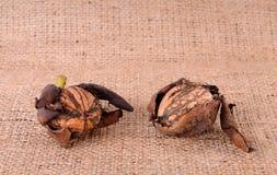 Plan rapproché de noix sur la toile à sac Image stock