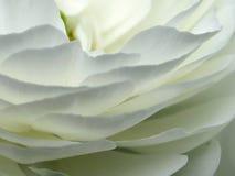 Plan rapproché de pétales de fleur Image stock