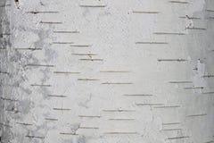 Plan rapproché de papier de fond naturel de texture d'écorce de bouleau Photographie stock libre de droits