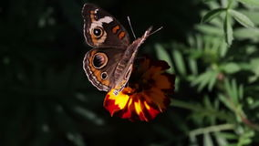 Plan rapproché de papillon Photo stock
