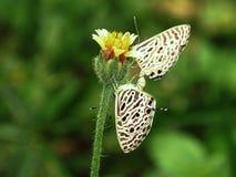 Plan rapproché de papillon Image stock