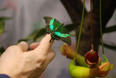 Plan rapproché de papillon en main Images libres de droits