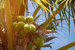 Plan rapproché de paquet de noix de coco Images libres de droits