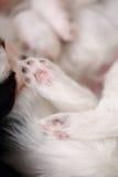 Plan rapproché de pattes de chien Photo libre de droits