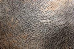 Plan rapproché de peau d'éléphant Image stock