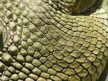 Plan rapproché de peau de crocodile Photographie stock libre de droits