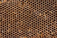Plan rapproché de peigne de miel un jour ensoleillé Photographie stock libre de droits