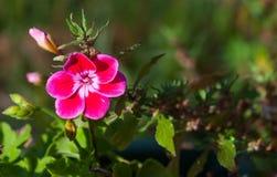 Plan rapproché de petites fleurs Images libres de droits