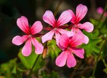 Plan rapproché de petites fleurs Photos libres de droits