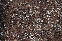 Plan rapproché de petits pétales blancs de cerise dispersés sur le sable photographie stock libre de droits