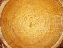 Plan rapproché de photo du bois de coupe Photographie stock libre de droits