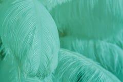 Plan rapproché de pile des plumes pelucheuses de menthe de bleu Photos stock